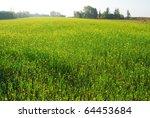field   meadow | Shutterstock . vector #64453684