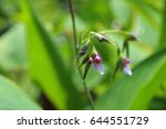 flowers calathea picturata.... | Shutterstock . vector #644551729