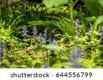 close up shot of blue ajuga... | Shutterstock . vector #644556799