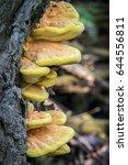 detail of edible mushroom... | Shutterstock . vector #644556811
