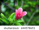 Pink Flower With Green Leaves....