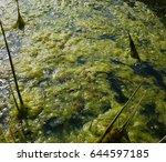 Small photo of algae, cladophora