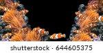 sea anemone and clown fish in... | Shutterstock . vector #644605375