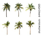 coconut trees on white... | Shutterstock . vector #644614585