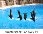 dolphin show | Shutterstock . vector #64462744