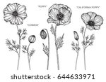 Cosmos  Poppy  California Popp...