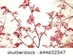 cherry blossoms in spring  soft ... | Shutterstock . vector #644652547