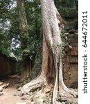 ta prohm  cambodia ruins | Shutterstock . vector #644672011
