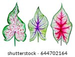 watercolor exotic leaves. clip... | Shutterstock . vector #644702164