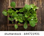 vegetables seedling ready for... | Shutterstock . vector #644721931