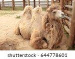 Close Up Of A Camel Head.