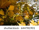 colorful autumn leaves in the... | Shutterstock . vector #644781901