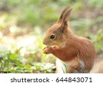 squirrel eating the nut in the... | Shutterstock . vector #644843071