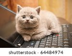 Stock photo close up little british lilac kitten lying on a laptop 64484974