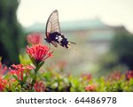 A Butterfly On A Beautiful...
