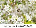 spring day. shaggy bumblebee... | Shutterstock . vector #644892421
