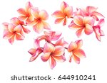 beautiful plumeria flowers or... | Shutterstock . vector #644910241