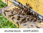 the bees at front hive entrance ... | Shutterstock . vector #644916001