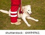 scene on a dog meeting sept....   Shutterstock . vector #64494961