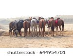 A Group Of Horses Around The...