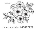 wild rose flowers drawing and... | Shutterstock .eps vector #645012799