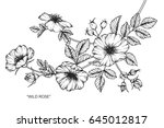 wild rose flowers drawing and...   Shutterstock .eps vector #645012817
