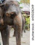 elephant | Shutterstock . vector #645028249