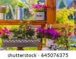 blooming flowers in the balcony ... | Shutterstock . vector #645076375