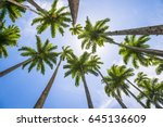tall royal palm trees line up... | Shutterstock . vector #645136609