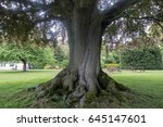 trunk of a big tree with big... | Shutterstock . vector #645147601
