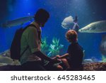 father and son look at the fish ...   Shutterstock . vector #645283465