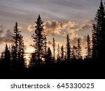 sunrise through trees | Shutterstock . vector #645330025
