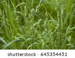 Close Up Of Flower Heads Of...