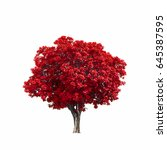 beautiful red tree isolated on... | Shutterstock . vector #645387595