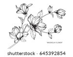 magnolia flowers drawing and... | Shutterstock .eps vector #645392854