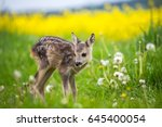 Stock photo young wild roe deer in grass capreolus capreolus new born roe deer wild spring nature 645400054