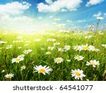 field of daisy flowers | Shutterstock . vector #64541077