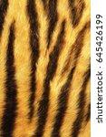 Detailed Tiger Stripes Fur ...