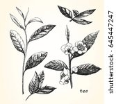 hand drawn illustration of tea. ... | Shutterstock .eps vector #645447247