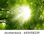 the warm spring sun shining... | Shutterstock . vector #645458239
