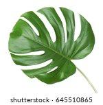 monstera leaf  isolated on white | Shutterstock . vector #645510865