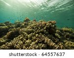 coral and fish in the red sea. | Shutterstock . vector #64557637