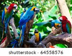 Group Of Beautiful Parrots In A ...