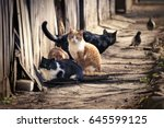 a group of homeless cats on the ... | Shutterstock . vector #645599125