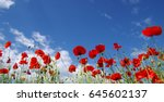 Red Poppies On Field  Sky And...