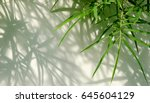 green bamboo leaf of tree with... | Shutterstock . vector #645604129