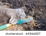Cat Digging And Tired. Photo  ...