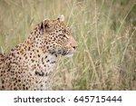 side profile of a leopard in... | Shutterstock . vector #645715444
