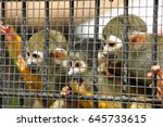 Three Cute Squirrel Monkeys...