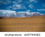 tibetan antelope | Shutterstock . vector #645744481